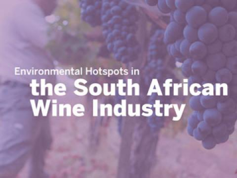 Cover photo for South African wine industry grapes